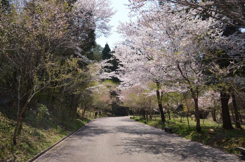 東山森林公園 下米田さくらの森